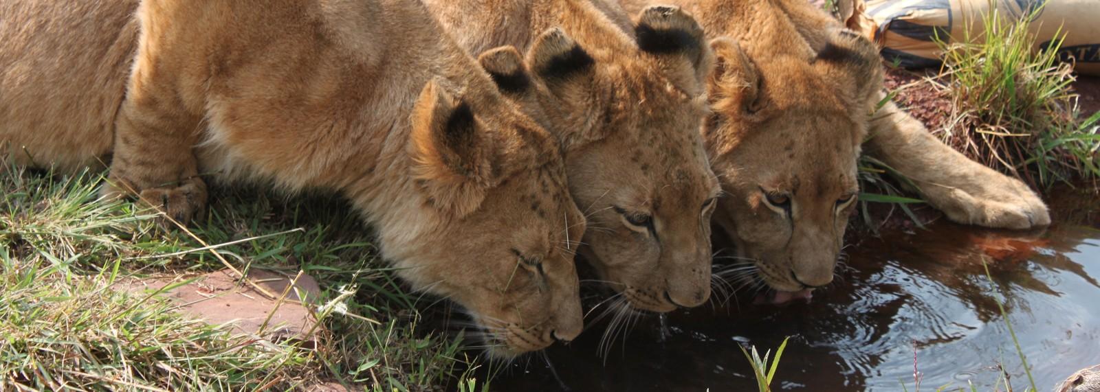 lions travel thrive communications pr